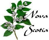 provincial flower of nova scotia ....the mayflower