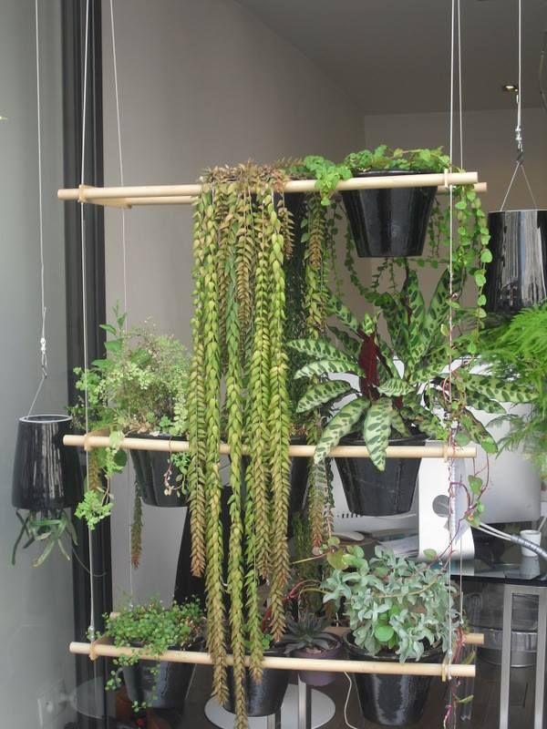 separar espacios con plantas diy pinterest