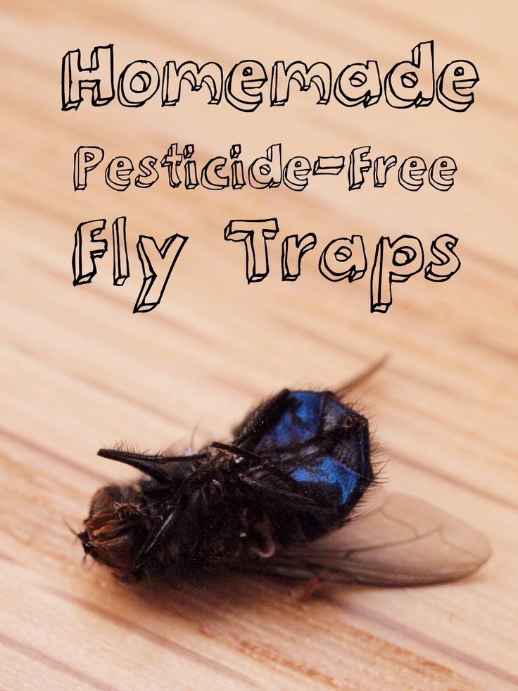 Best 25 Homemade Fly Traps Ideas On Pinterest Bug Trap