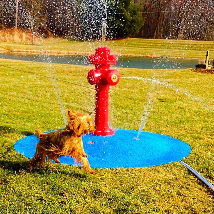 Diy Splash Pad For Dogs: 35 Best Backyard Splash Pad And Fun Ideas Images On