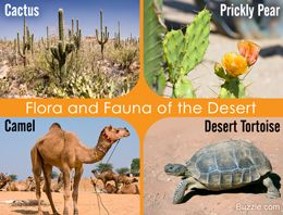 Desert biome plants and animals