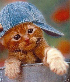 *Photos trop mignon de petit chaton!! venez vous allez adorer!!*