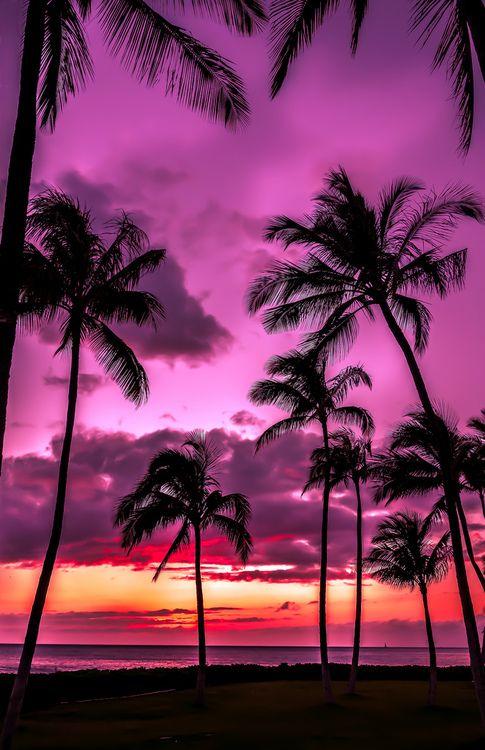 Purple Hawaii.