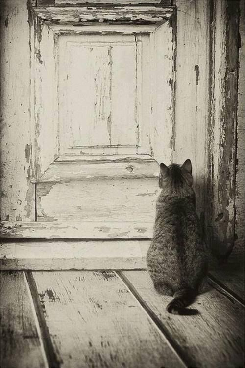 #kat #zwartwit #wachten