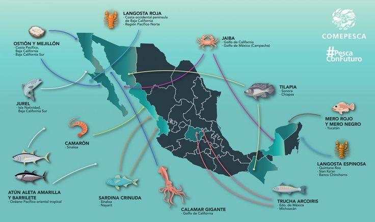México, mundo, tenemos un problema: los mares son sobreexplotados en un 70%. Esto significa que existe el riesgo de extinción de algunas especies marinas.Para que la pesca siga siendo una actividad comercial viable es importante usar los recursos con criterios de sustentabilidad. La pesca sustentable