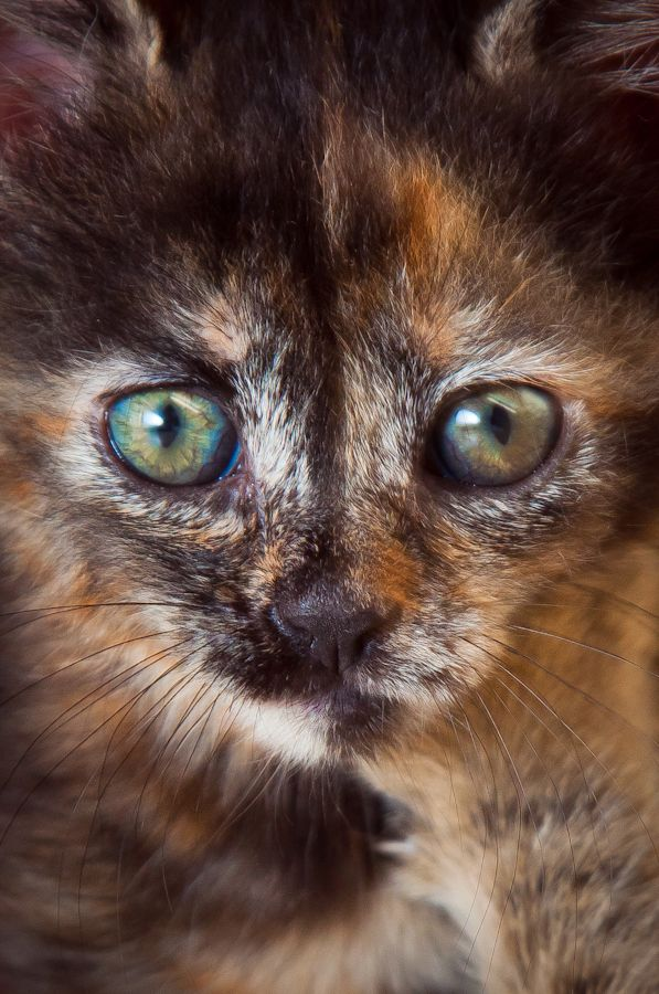 172 Best Images About Cats For Holly Our Tortoiseshell