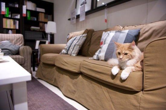IKEA – Herding Cats