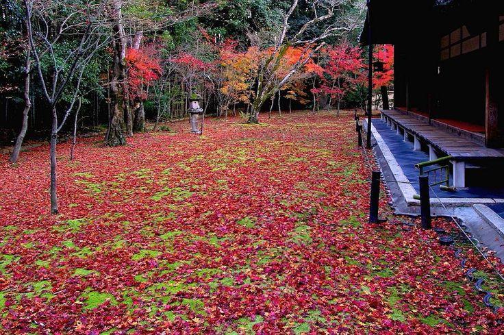 2011年12月の京都。大徳寺高桐院の散り紅葉です。ずいぶん前に、ここの庭一面真っ赤な落ち葉に覆われたポスターがありました。それを見て京都の紅葉の素晴らしさを知りました。2011年12月5日撮影 #京都 #紅葉 #京都好き #大徳寺 #高桐院 #大徳寺高桐院 #kyotojapan #kyotophoto #daitokuji