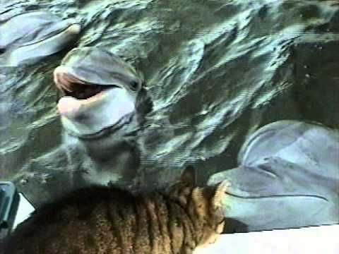 Cat and Dolphin playing together! Most amazing video ever!