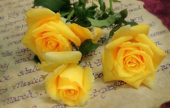 Обои на рабочий стол. Обои письмо, розы, жёлтые, жёлтые розы скачать.