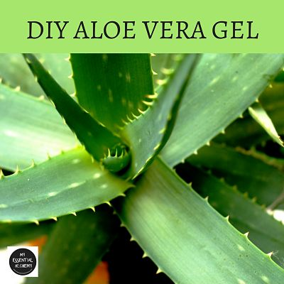 ALOE VERA GEL-How to make your own