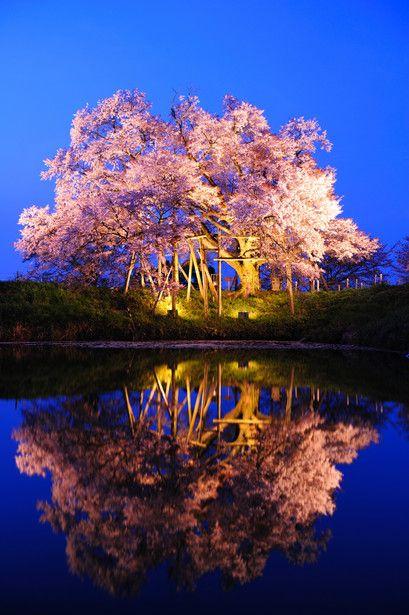 Asai, Fukuoka, Japan #桜 #CherryBlossom #reflection