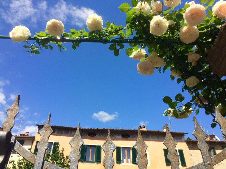 Spring time roses against Medieval buildings
