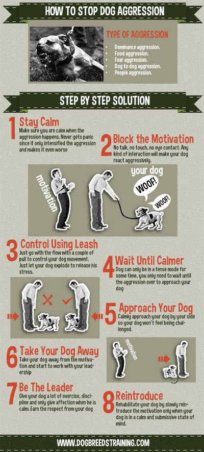 How to stop dog aggression infographic. Check out full article on my website!