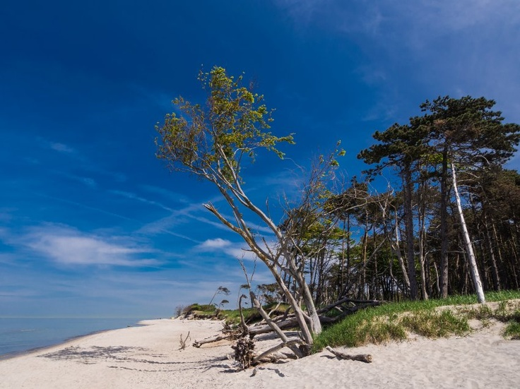 West Beach, Darss, Mecklenburg/Germany