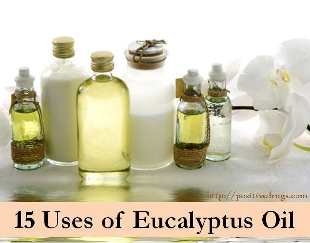 15 Uses of Eucalyptus Oil - positiveDrugs - - - http://positivedrugs.com/2013/09/14/15-uses-eucalyptus-oil-2/