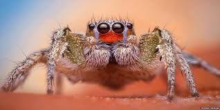 Hasil gambar untuk laba laba terbesar