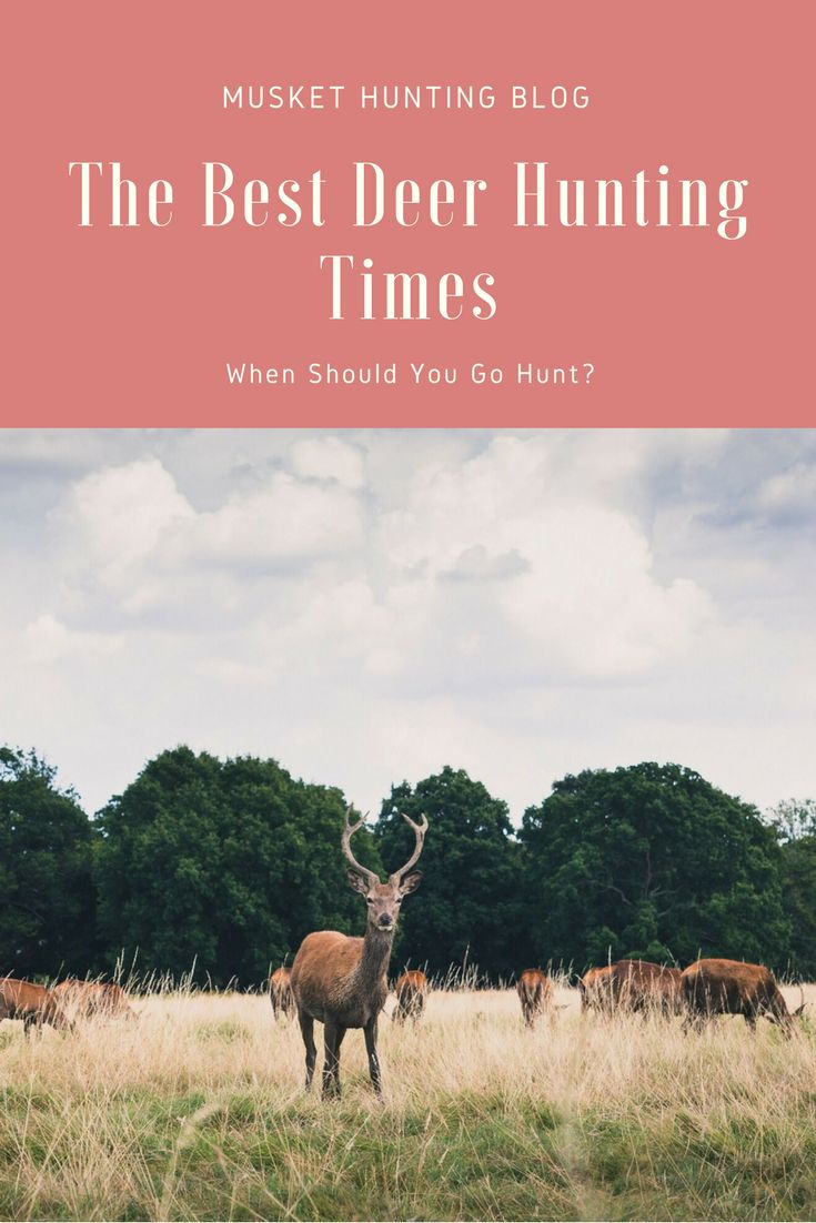 Do you want to know when you should start hunting deer for a more successful hunt? I show you the best deer hunting times to stay prepared