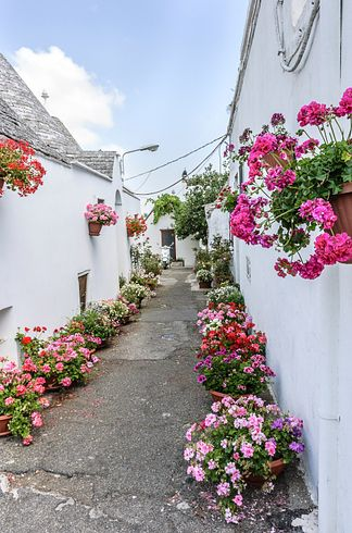 street in Alberobello lined with flowers
