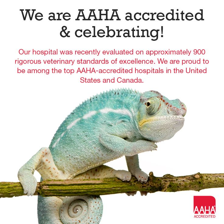 ACVH has been AAHA Accredited since 2009! We are proud to offer our clients the highest quality medical care for their pets! Visit www.creaturehealth.com for more information!