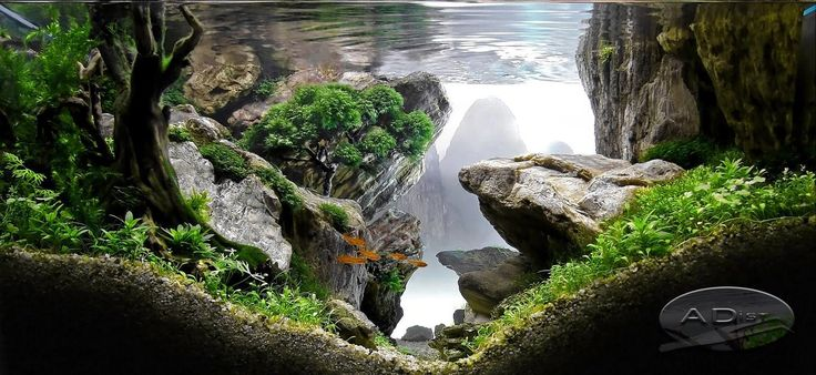 17 best images about aquarium aquascape on pinterest for Aquarium recifal complet