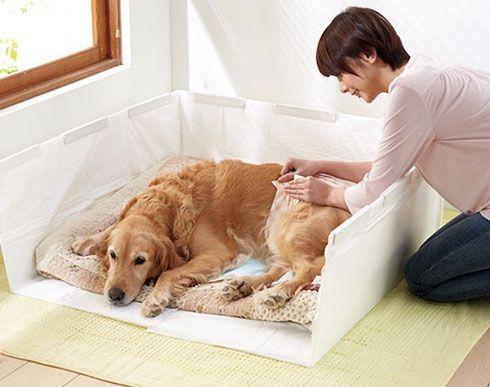 Best 25 Indoor Dog Potty Ideas On Pinterest Apartment
