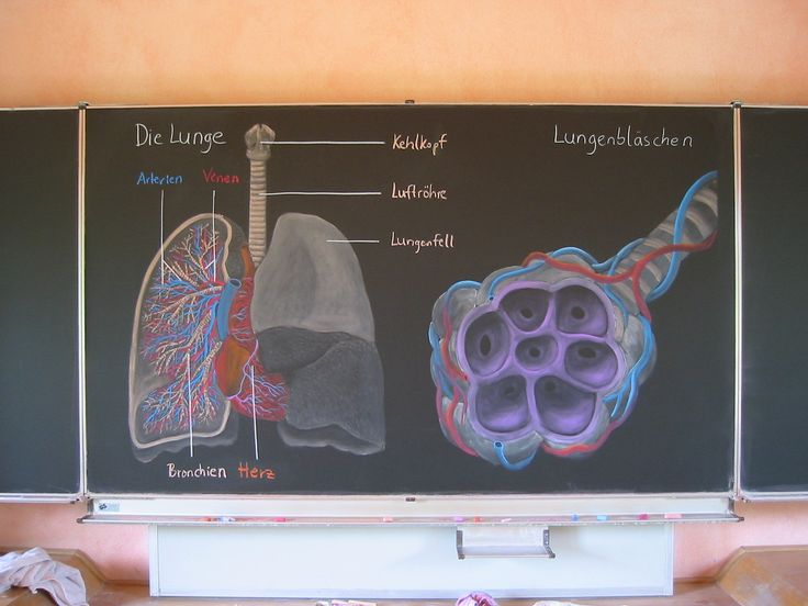 Waldorf ~ 7th grade ~ Human Physiology ~ chalkboard drawing