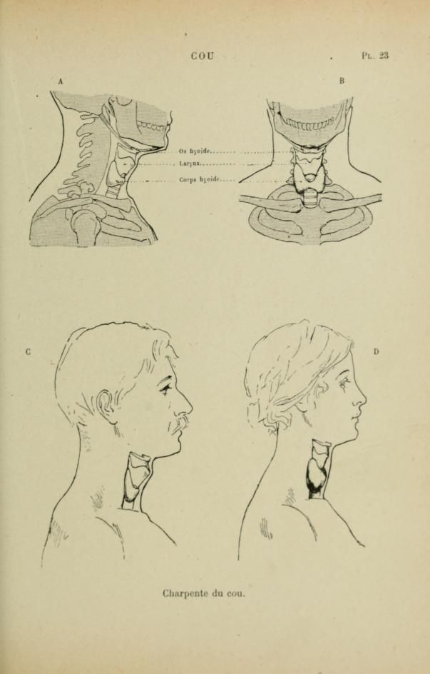 Differences in male and female anatomy