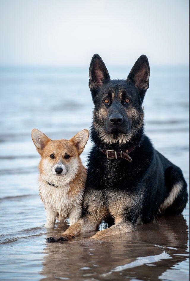 Best buddies.
