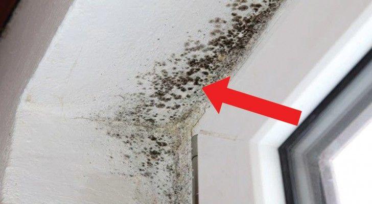 Wenn ihr Schimmel im Haus habt solltet ihr euch darüber im Klarensein, dass er der Grund für einige sehr ernste gesundheitliche Probleme sein kann. Schimmelflecken an Wänden entwickeln sich häufig…