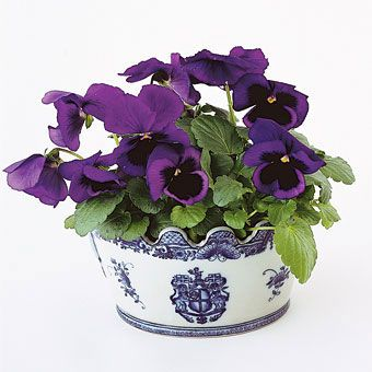 Brides.com: Potted Plants as Wedding Centerpieces. You might consider the pots your mother has collected over the years as containers for plants—they're usually a unique mix. Or visit flea markets for six months, and scoop up every, say, pale green container you find. Deep purple pansies nestle in Chinese cachepot, J.D. Flessas Florist, 212-289-8484.