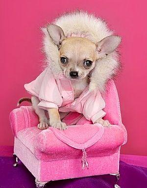 Dog Coats For Sale