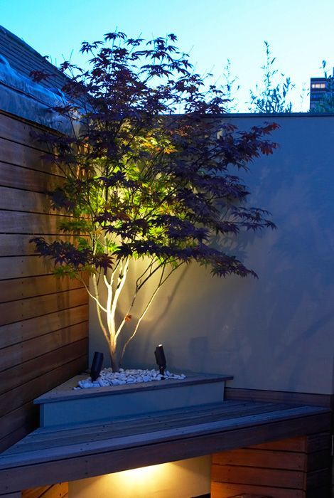 Planting a Japanese Maple - uplighting is nice