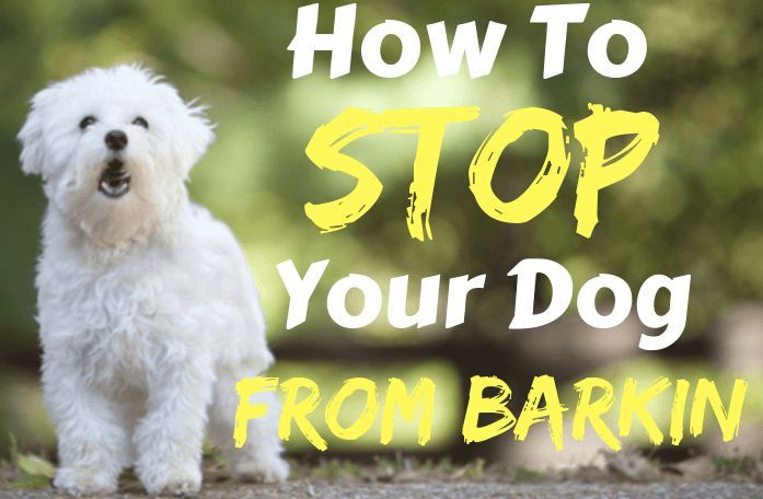 Stop Dog Barking 10 Easy Ways To Quickly Reduce Excessive Barking Stop Dog Barking Dog Barking Dog Clicker Training