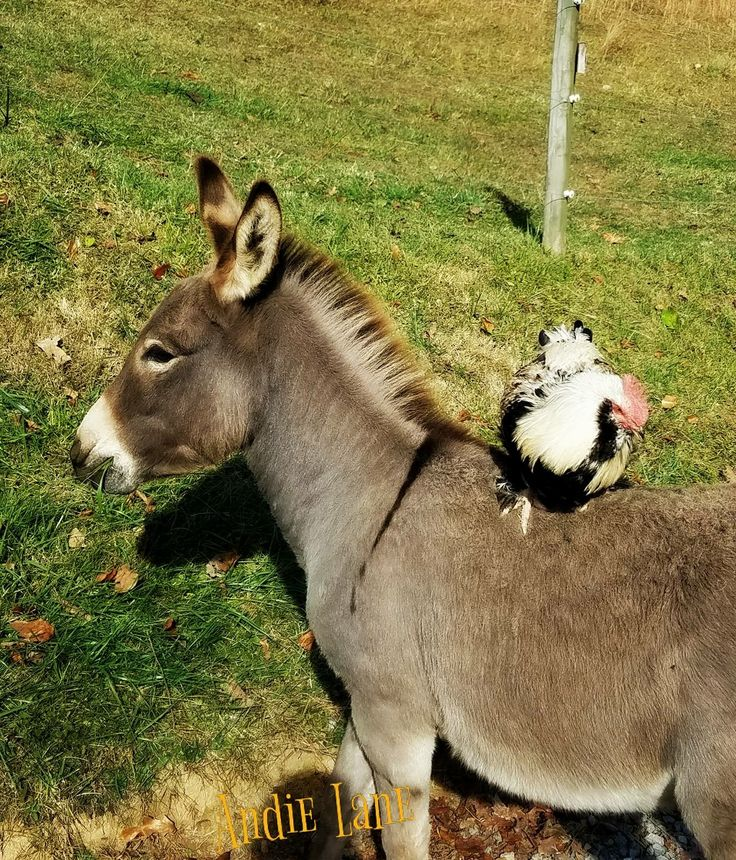 Andie N Mike Lane ~ Only Donkeys