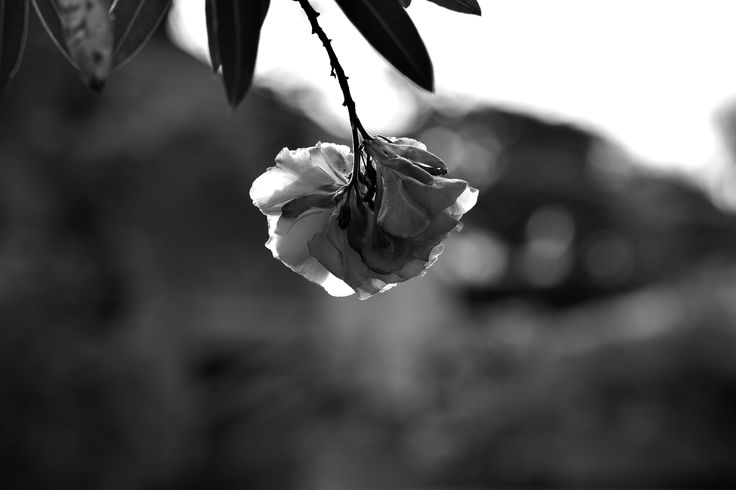 Beautiful hanging flower