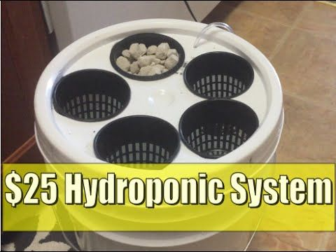 $25 DIY Hydroponics 5 Gallon Bucket Deep Water Culture - YouTube
