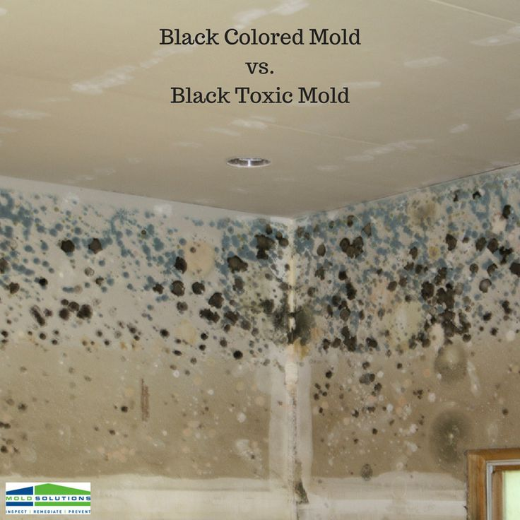 Do you have black colored or black toxic mold in your home
