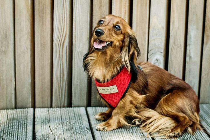 Harnais pour chien en tissus Bowl and Bone – Hariet & Rosie