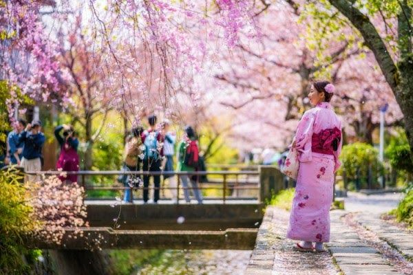 Wallpaper Taman Bunga Sakura Hd Ideku Unik