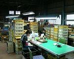 十三秀(とみひで)刃物製作所は岐阜県関市の刃物の街の中に十三秀刃物製作所があります。創業40年の歴史と伝統があり、刃物の街関市の中でも有数の包丁砥ぎとしては 有名な十三秀製作所です。家庭用包丁から業務用包丁、職人用包丁のサバキ、スジ引き、肉切りとありとあらゆる包丁を砥ぎます。どんなに錆びていても、使えない包丁 でも職人の技ですばらしい切れ味に仕上げます。職人用包丁や業務用包丁の販売、料理の鉄人で有名な坂井シェフオリジナルの包丁も 販売しておりますので、購入希望の方はご連絡ください。