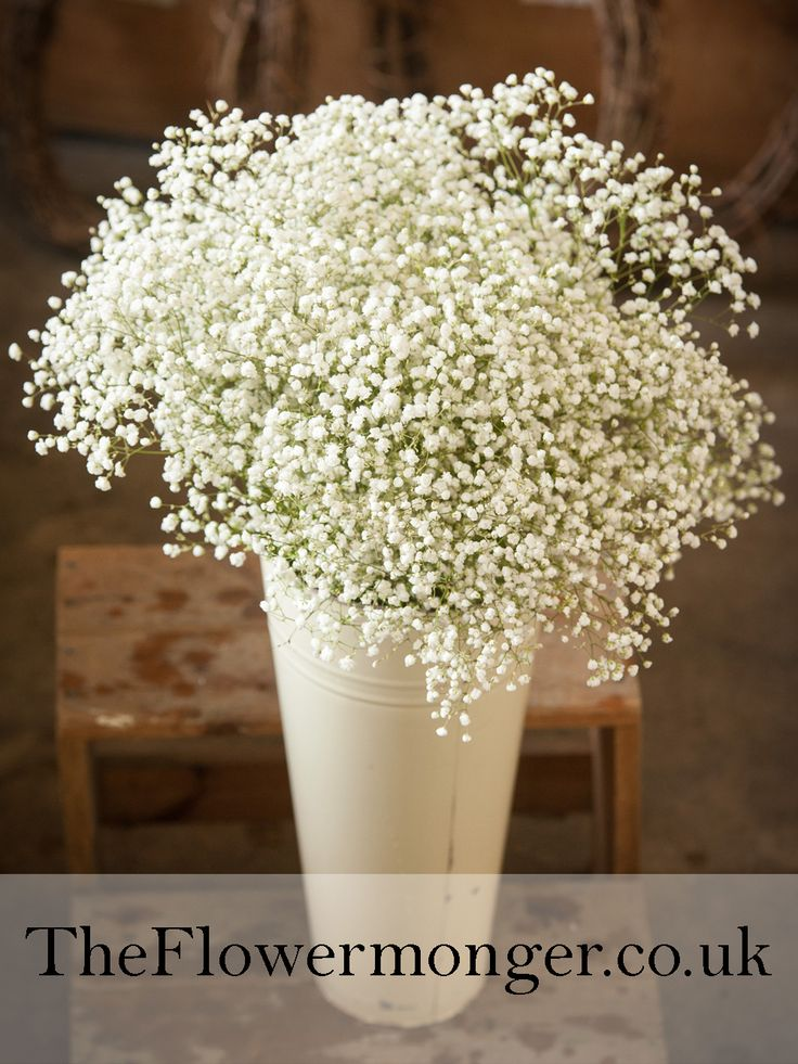 Gypsophila (Baby's Breath) Available in bunches of 5 stems from The Flowermonger, the wholesale floral home delivery service.(picture shows 25 stems)