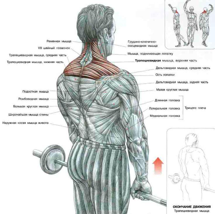 Упражнения шраги со штангой