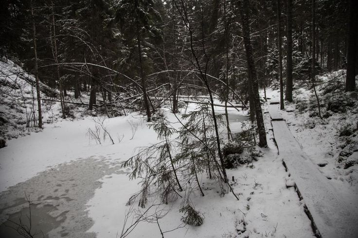 Frozen water #visitsouthcoastfinland #Lohja #karnaistenkorpi #snow #winter #frozen