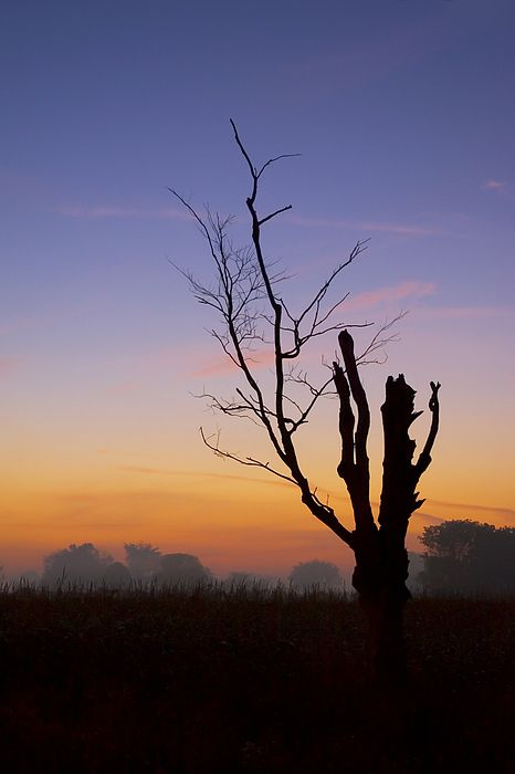 The silhouette of a leafless tree at dawn