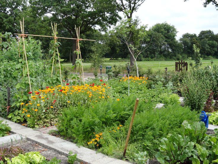 moestuin 1e jaar nieuwe tuin