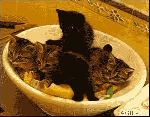 "These five little kittens, cuddled together in a large bowl, are watching something that's simply blowing their minds. Seriously. They're all like, ""W..."