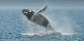 Whale-watching excursions and cruises.