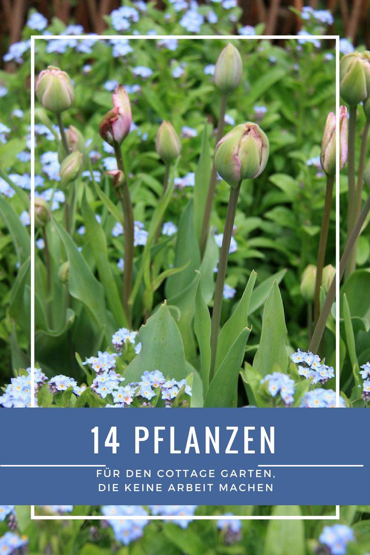 Mein Garten machtwirklichnicht viel Arbeit. Das glaubt mir zwar niemand, ist aber so.Das Geheimnis liegt in der richtigen Auswahl der Pflanzen. Und in der Behauptung, dass ein gepflegter Rasen mehr Arbeit macht als ein intelligent angelegtes Staudenbeet.Also Mut zur Blütenfülle, traut Euch ran an Euren Märchengarten.Und deswegen verrate ich Euch meine 14 Lieblingspflanzen für Faule. Oder für Viel-Beschäftigte.