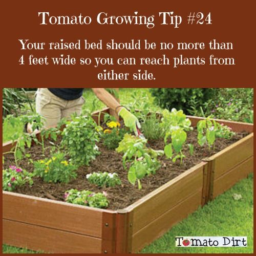 35 Best Tomato Problems Images By Tomato Dirt On Pinterest